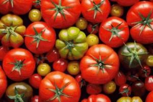 蔬菜中的生果吃西红柿有9大优点其间有助瘦身是对我最有用的