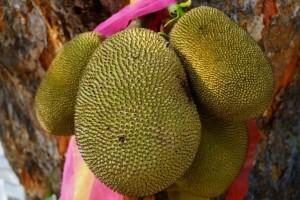 菠萝蜜海南和泰国有什么不同介绍菠萝蜜的营养价值