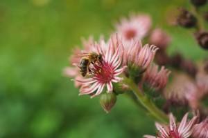 花粉过敏性鼻炎流清水如何护理如何预防过敏性鼻炎